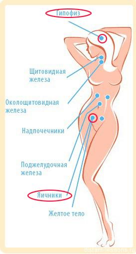 kak-vliyaet-seks-na-zhenskie-gormoni