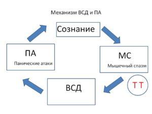 1-Механизм ВСД и ПА