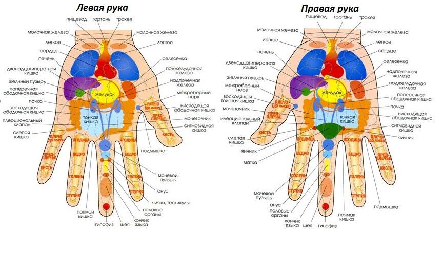 точки и органы на руках